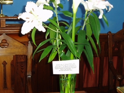 Lillies presented by the Sandwich Town Council Aug 2014